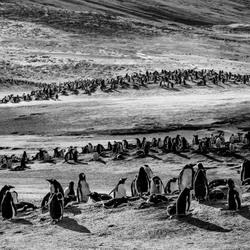 Penguin Landscape