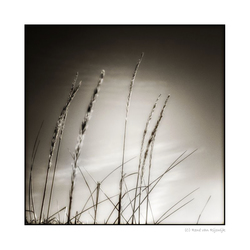 's Gravenzande 05 --Gras--