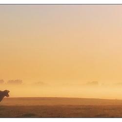 Een opname uit de oude doos, mist, zonsopkomst