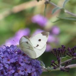 Witte schoonheid in eenvoud