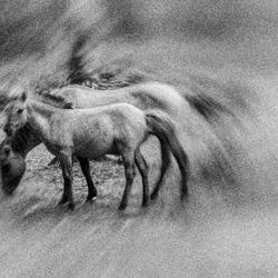 Rusteloze paarden