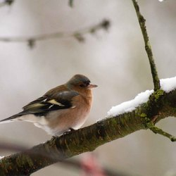 vogels in de tuin 10