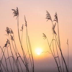 Mistige zonsopkomst