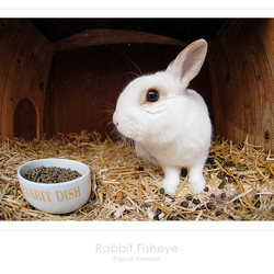 Rabbit Fisheye