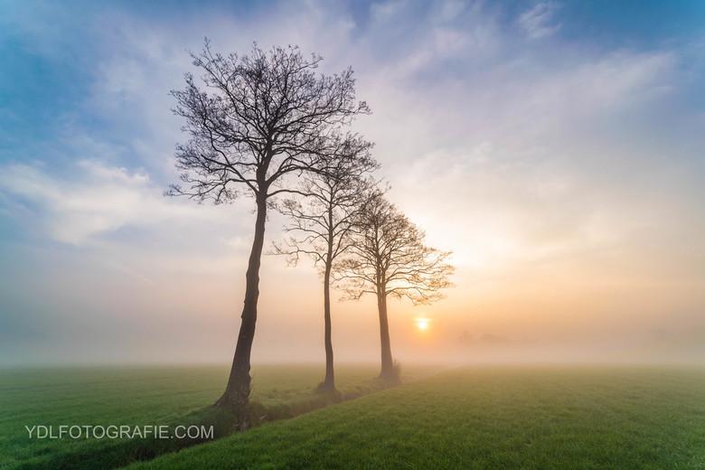 Bomen tijdens mistige zonsopkomst.