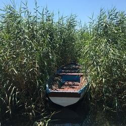 Eenzame boot in riet