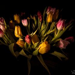 Flashing tulips