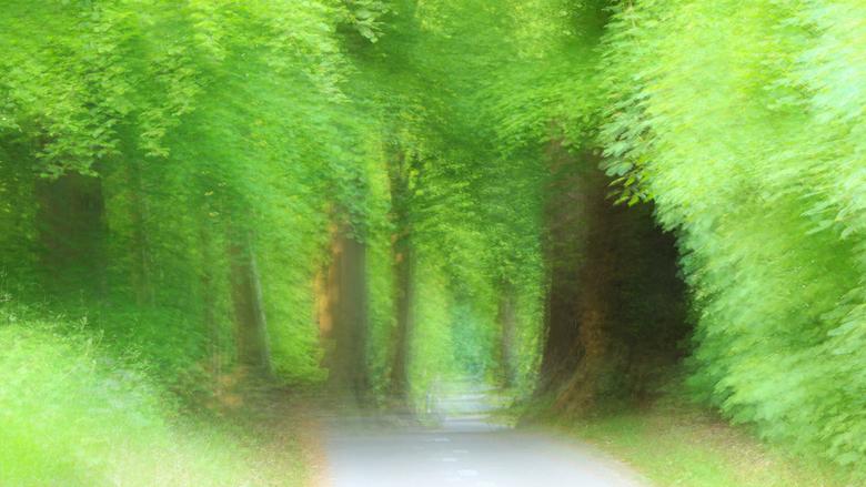 Forest Fantasy - Heilooërbos<br /> Fietspad met dikke Beukebomen.<br /> 9 foto&#039;s samengevoegd in camera