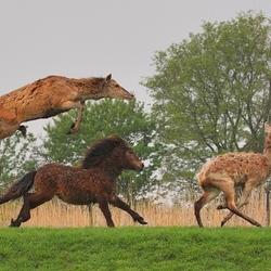 Vliegende hert