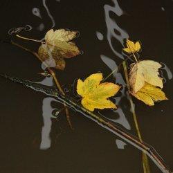 Reflectie- 3-
