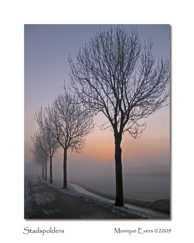 Stadspolders Dordrecht - Ik onderbreek de serie van de reis door de US even met een paar foto's die ik gisteren ochtend heb genomen. Het was wel