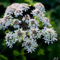 Prachtige wilde bloem