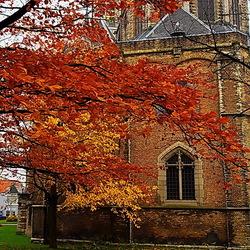 Delft tuin nieuwekerk
