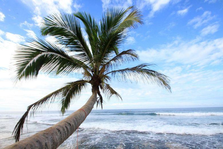 reizende palmboom - Deze is gemaakt in het zuiden van Srilanka.