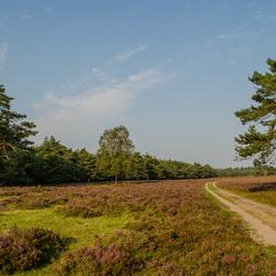 Wezepse Heide