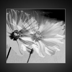 Een vleugje bloem.....