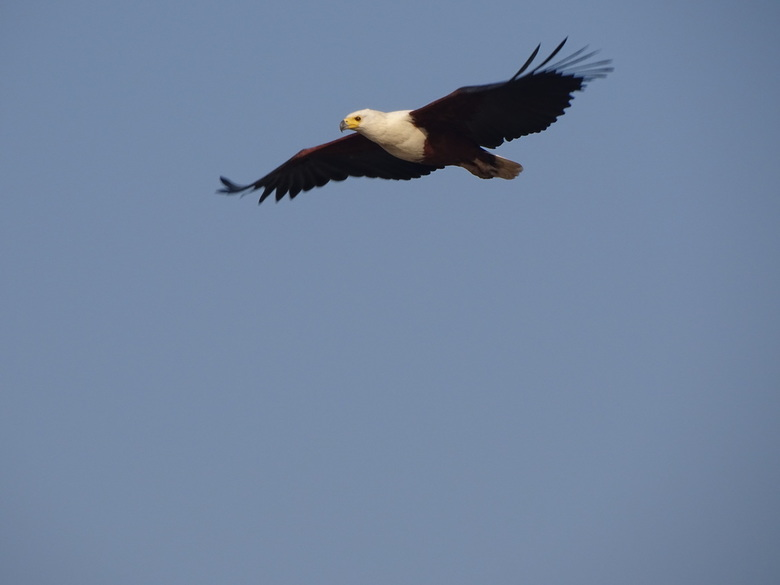 Flying high -