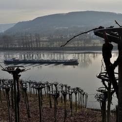 druivenlandschap met zicht op de Rijn