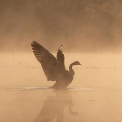 Strek je vleugels