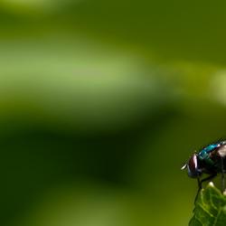 Sunny Fly