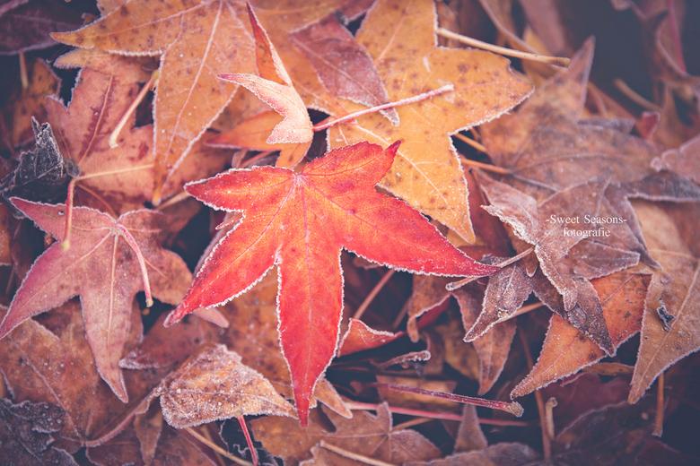 koude herfst