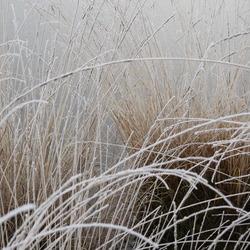 winter shot