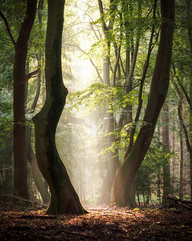 Tussen de bomen Speulderbos -