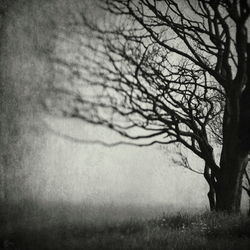 31 Days of Stillness ~ Somber