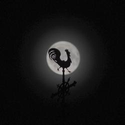 De haan in de maan