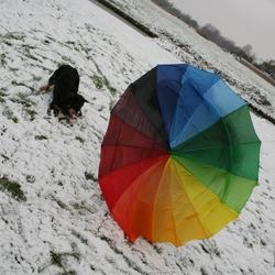 The dog and the umbrella