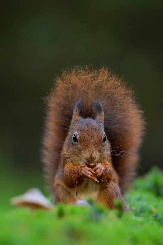 """Herfst - Na nootjes verzamelen ook even tijd voor een lunchpauze <img  src=""""/images/smileys/smile.png""""/>"""
