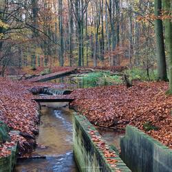 Herfst Waterloopbos waterloop