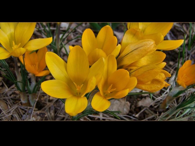 Tranche de vie - en ja.... de lente is er: je kan er niet meer langs kijken.Toch is het nog vrij frisjes buiten: maar wanneer de zon schijnt: heerlijk