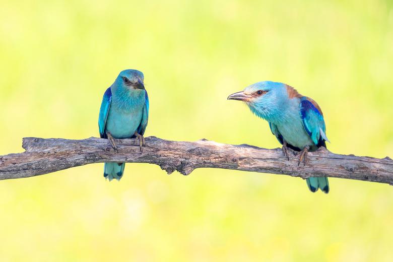 Twee voor de prijs van 1 - Dit vind ik 1 van de mooiste vogels, maar ze zaten constant ver weg. Toen we het bijna wilde opgeven kwamen zowel man als v