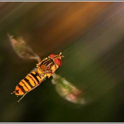 Vliegensvlug