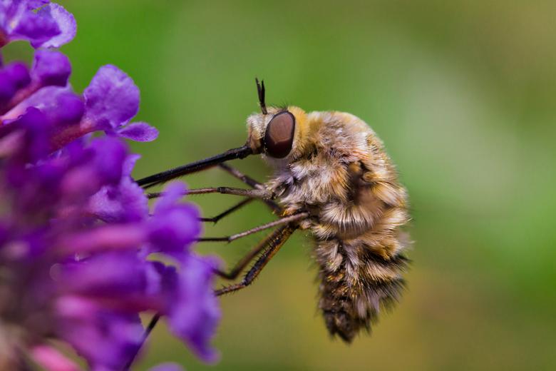 bzzzzz - iets met bloemetjes en bijtjes...
