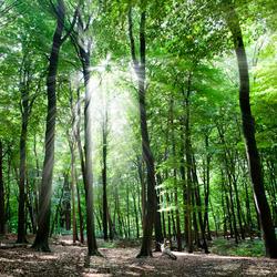 Lichtstralen in het donkere bos van Arnhem