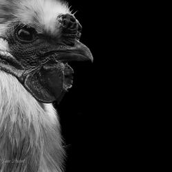 Chicken...