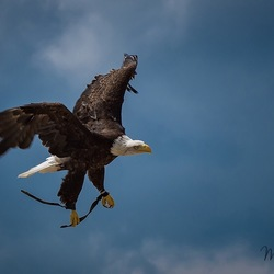 In vogelvlucht