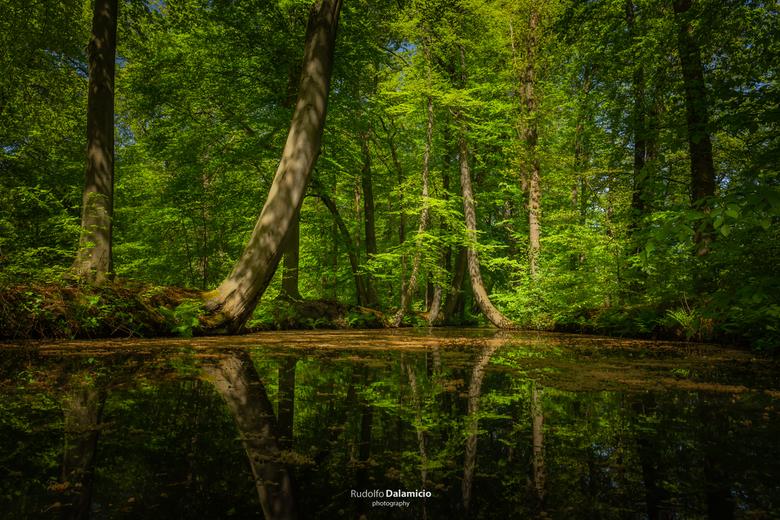 Power of life - In de lente is het tijd voor het blad. Groen, volop in de zon, net uit de knoppen. Heerlijk warm in de lente zon. Prachtige, sprookjes