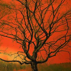 Hekseboom, een mythische boom.