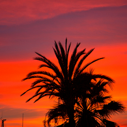 palmboom met zonsondergang