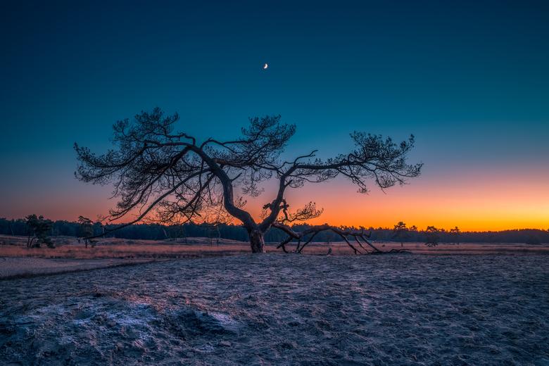 Dutch Desert