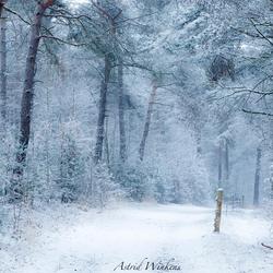 Wintertime III