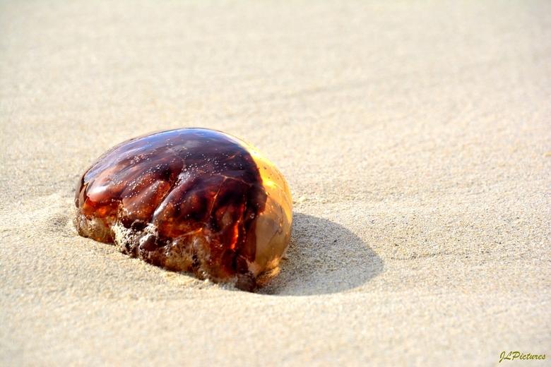 luminous jellyfish by jlp - deze mooi beschenen bijna licht gevende kwal lag op het strand Balnakeil Schotland, dat is in het noorden nabij Durness!<b