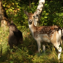Diep verscholen in het bos...