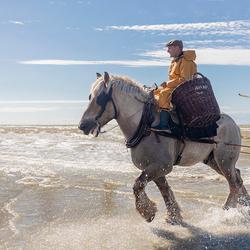 Garnalen vissen met paarden