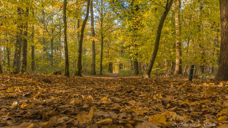 Herfst Schutterspark te Brunssum
