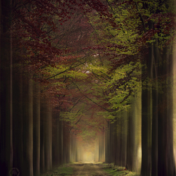 The tunnel of seasons