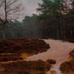 landschap-4286.jpg